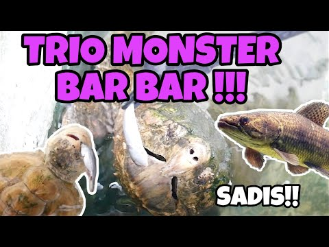 TRIO MONSTER BAR BAR !!! AST, FST ,AND WOLFISH!!!