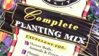 Planting Your Living Christmas Tree
