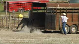 Repeat youtube video CowDog01.flv