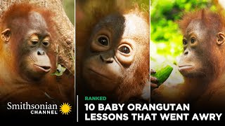 10 Baby Orangutan Lessons That Went Awry  Orangutan Jungle School | Smithsonian Channel