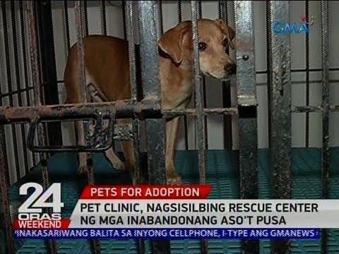 24 Oras: Pet clinic, nagsisilbing rescue center ng mga inabandonang aso't pusa