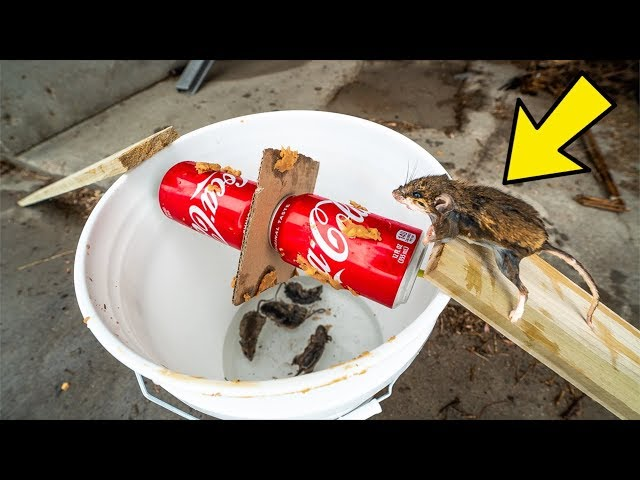 $5 HOMEMADE Mouse Trap ACTUALLY WORKS!!! (How To Make)