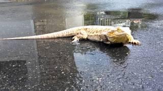 Babbu essait de nager dans la flac d