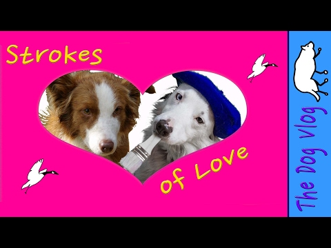 Strokes of Love - with love from Border Collies