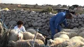 Ded baba i ovce.avi