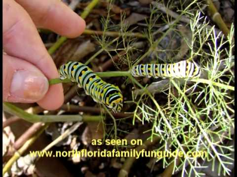 Genial Greathouse Butterfly Farm   Earleton, Florida   YouTube