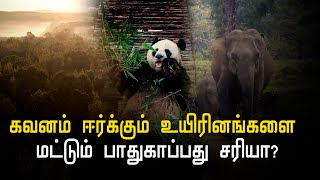 the-bambi-effect-in-protecting-endangered-species-hindu-tamil-thisai