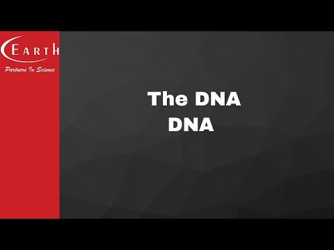 The DNA | DNA  | Molecular Basis of Inheritance | 12th science biology