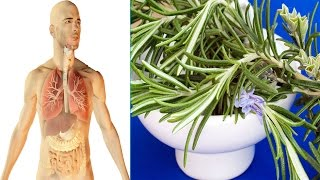 Baixar Here are the top 10 secret health benefits of rosemary for you.