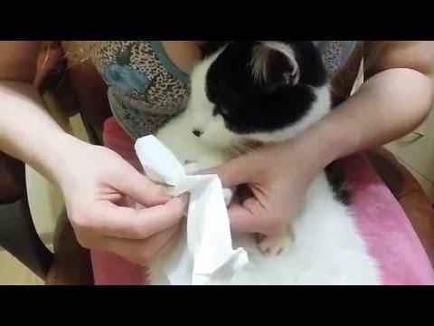 Как одевать антицарапки для кошек видео