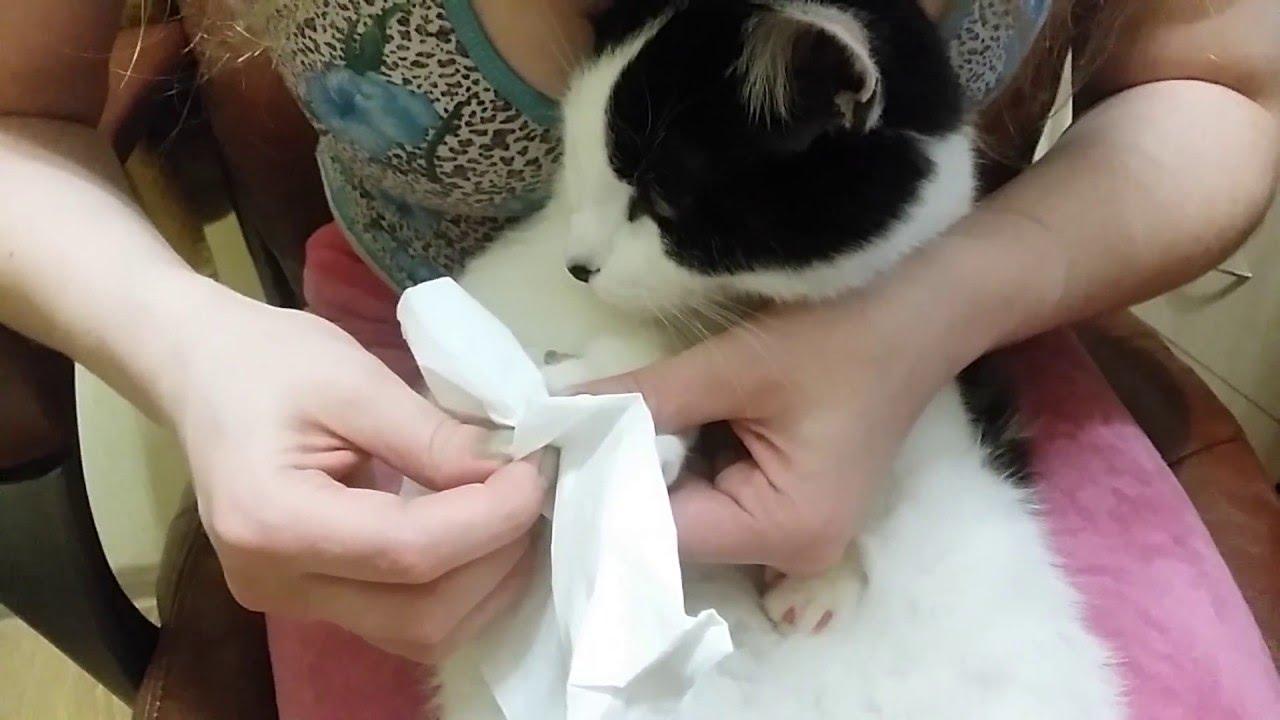 Антицарапки для кошек как одевать✅ Инструкция✅ Секреты ✅Отзывы