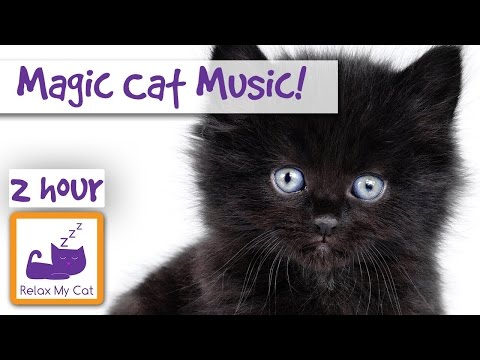 Magic Cat Music! Watch Your Cat Fall Asleep Before Your Eyes