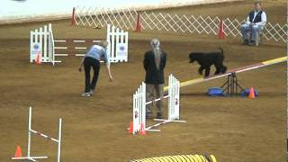 Akc 2011 Agility National Championships,  Kasha Standard Poodle