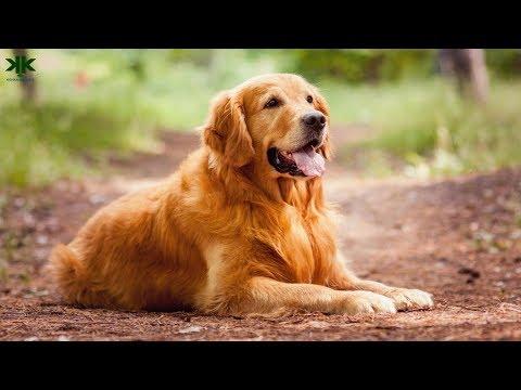 Hayvanlarda Epilepsi (Sara) Hastalığı: Köpekler