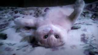Лучший кот!!! / Best cat!!!