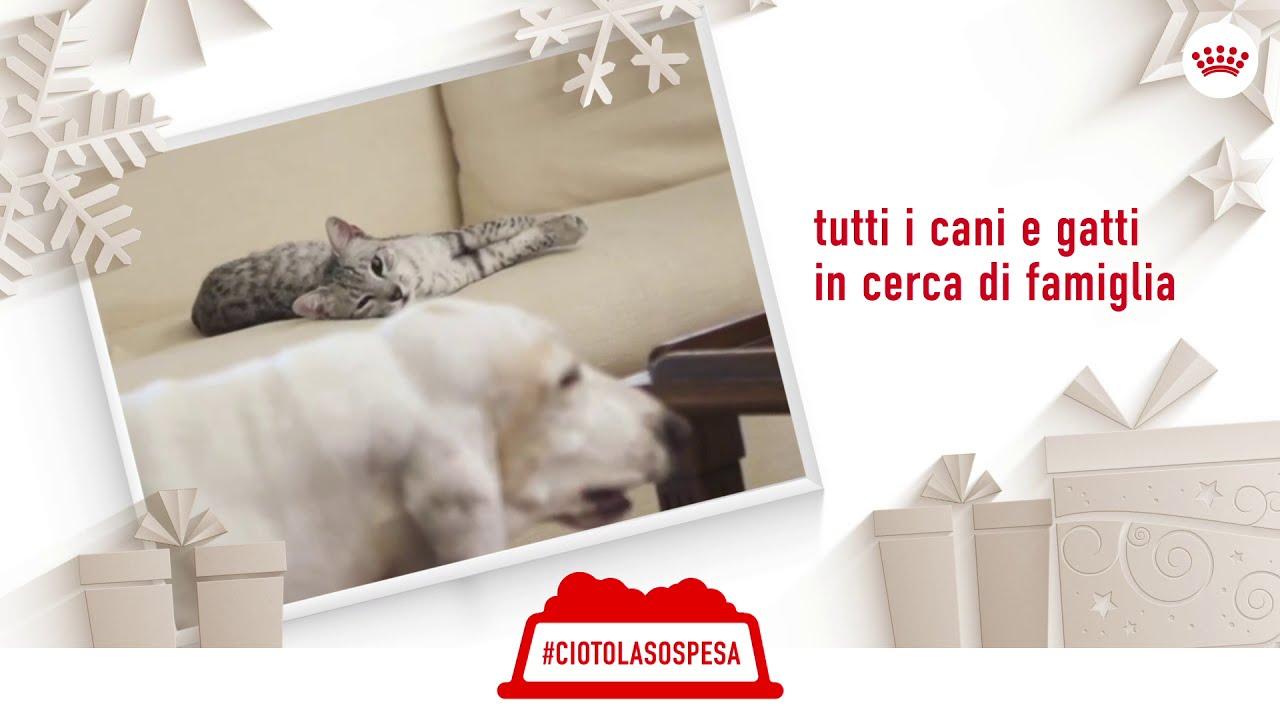 Royal Canin Campagna di Natale #CiotolaSospesa