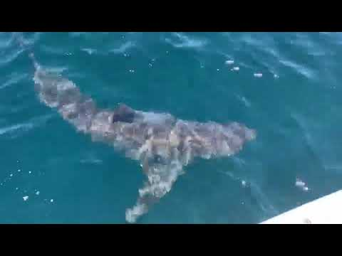 A Private Pensacola Fishing Trip Took An Unforgettable Turn When This Great White Appeared