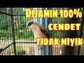 Cara Mengatasi Burung Cendet Miyik  Mp3 - Mp4 Download