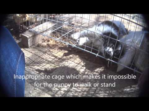 Canton Dog Alley - An Animals' Angels Investigation