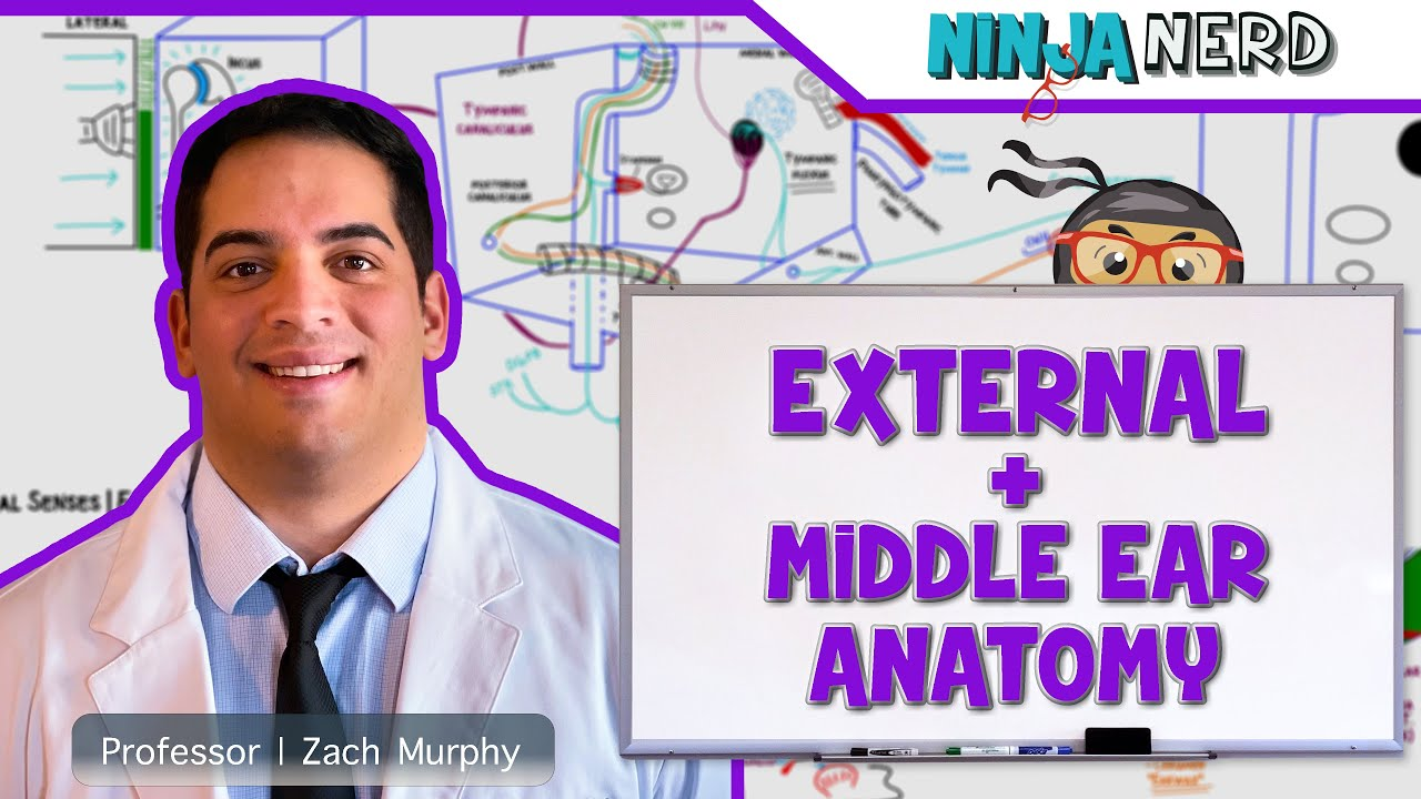 Special Senses | External & Middle Ear Anatomy - YouTube