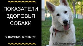 Показатели здоровья собаки. 4 критерия о которых нужно знать)
