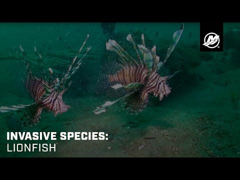 Invasive Species: Lionfish