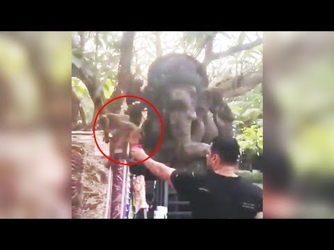 Salman Khan Offers Water To A Monkey And Says Bajrangi Bhaijaan Mp3