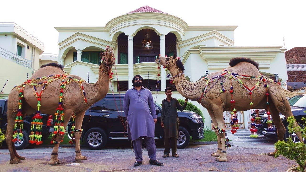 Sher E Punjab or Landcruiser men aane wale Bakray for Qurbani Eid 2021 - Bakra Mandi Pakistan