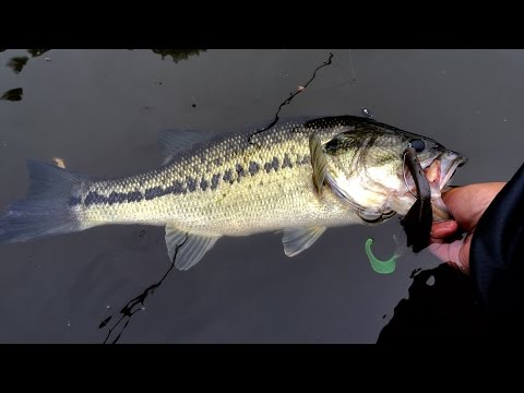 Losing a $300 Rod?!?! Bass Fishing at the Occoquan Reservoir in VA