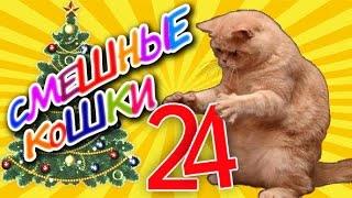Смешные кошки 24 ● Приколы с животными 2015 - коты ● Funny cats vine compilation - Part 24