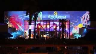This Video Previously Contained A Copyrighted Audio Track. Due To A Claim By A Copyright Holder, The Audio Track Has Been Muted.     Birch Aquarium Projector Mapping