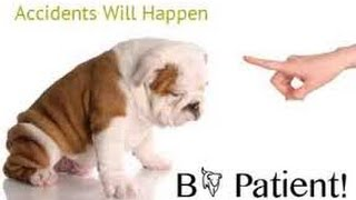 Housetraining a Puppy 101 - What to Do When Accidents Happen