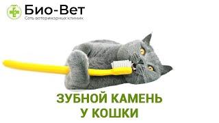 Зубной камень у кошки