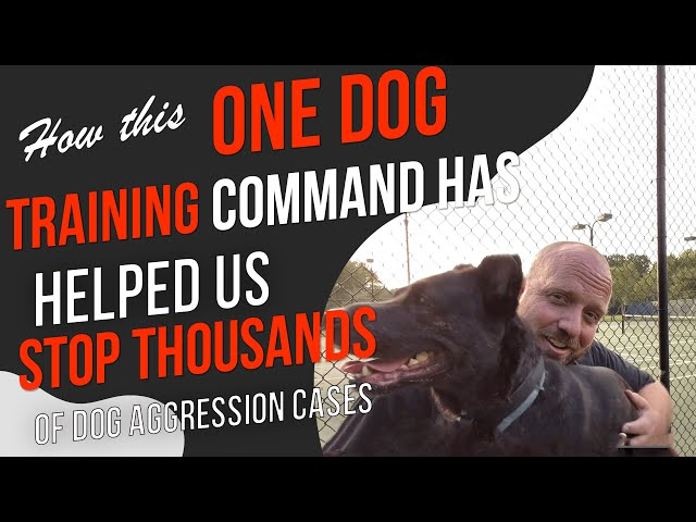 How to Calm an Aggressive Dog- Putting an End to Dog Aggression Once and For All