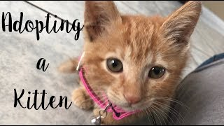 ADOPTING A 3 MONTH OLD KITTEN | Vlog