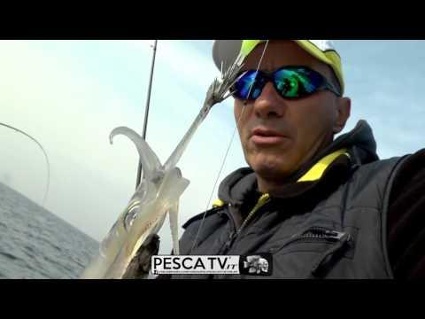 CALAMARI nel Golfo di Venezia