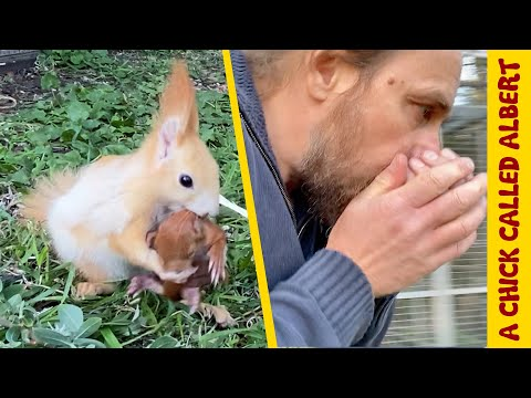 Helping Baby Squirrels takes a bad turn