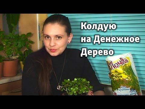Колдую на Денежное Дерево