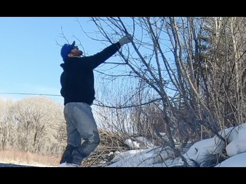 HOW TO GET YOUR FLY OUT OF A TREE - FLY FISHING