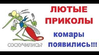 Лютые приколы Комары появились!!!  Чёткие мемы