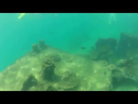 Snorkeling around some wrecks off of Brisbane Australia