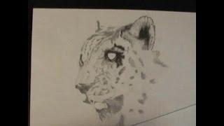 Рисуем барса карандашом поэтапно (часть 1). Как рисовать животных. Уроки рисования