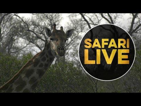 safariLIVE  - Sunrise Safari - July 20, 2018