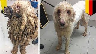 Anjing ini diselamatkan bulunya tertutupi kotorannya sendiri - Tomonews