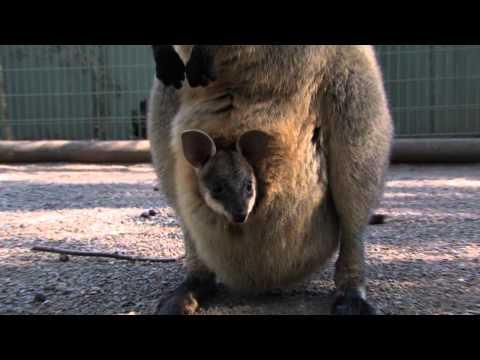 Featherdale Wildlife Park, Sydney, Australia; Part 1.