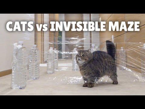 Cats Vs Invisible Maze