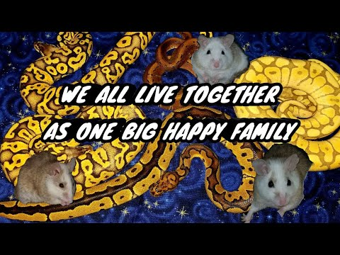 SNAKES, RATS & MICE ..... LIVING TOGETHER