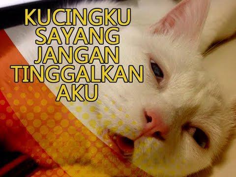 Unduh 65+  Gambar Kata Kucing Sedih Imut HD