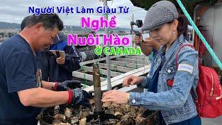 Nghề Kiếm Tiền Triệu Ở Canada, Lần Đầu Trải Nghiệm Cách Người Việt Nuôi Hàu 🇨🇦397》  Oyster Farming