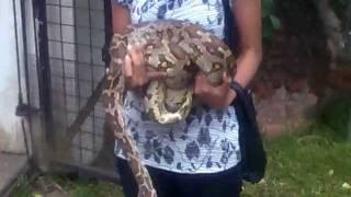 Girl Handling a python snake in pets corner Dehiwala zoo Sri Lanka